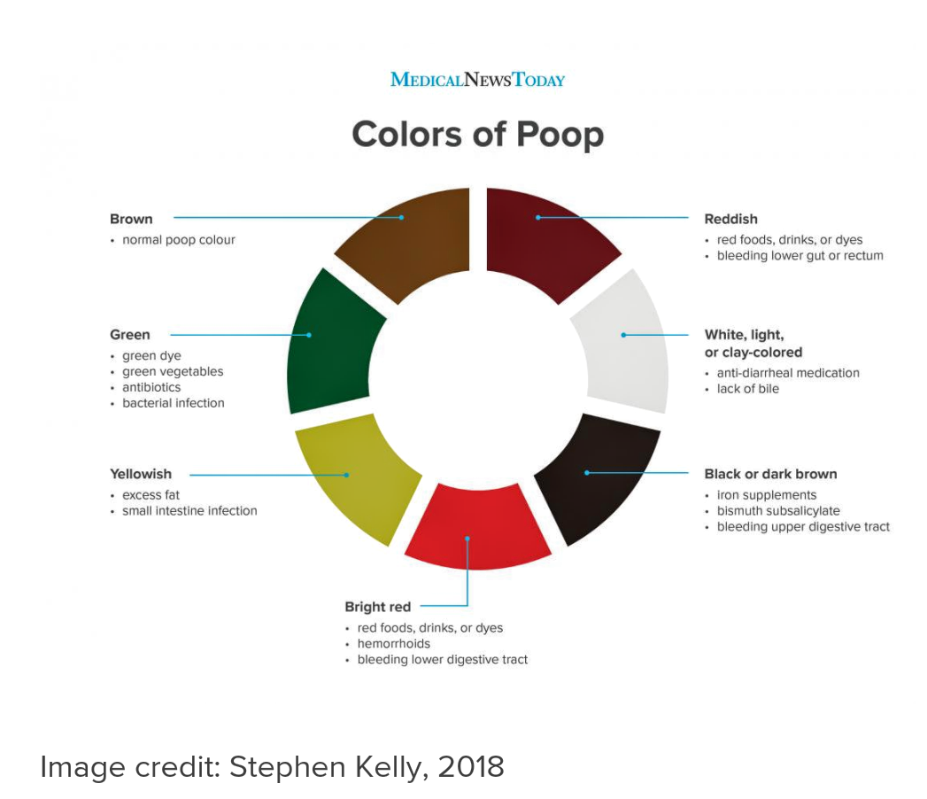 (19-02-02) Poop